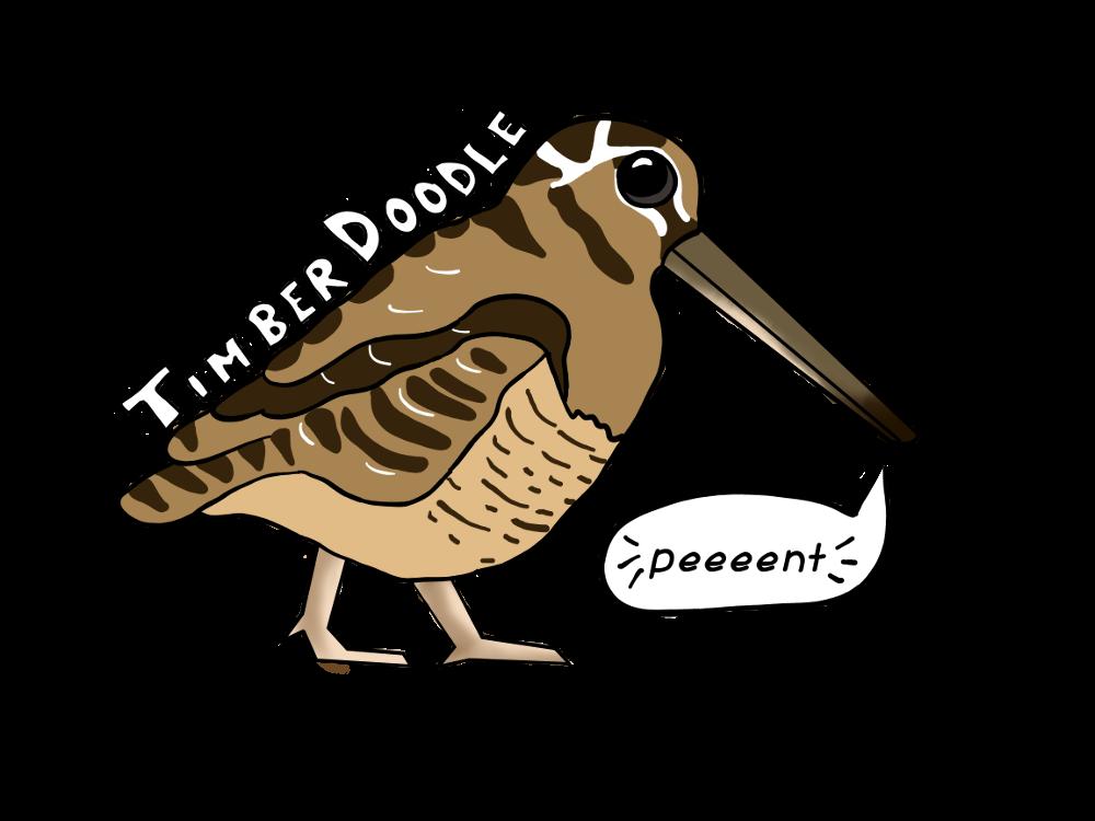 12. Timber Doodle