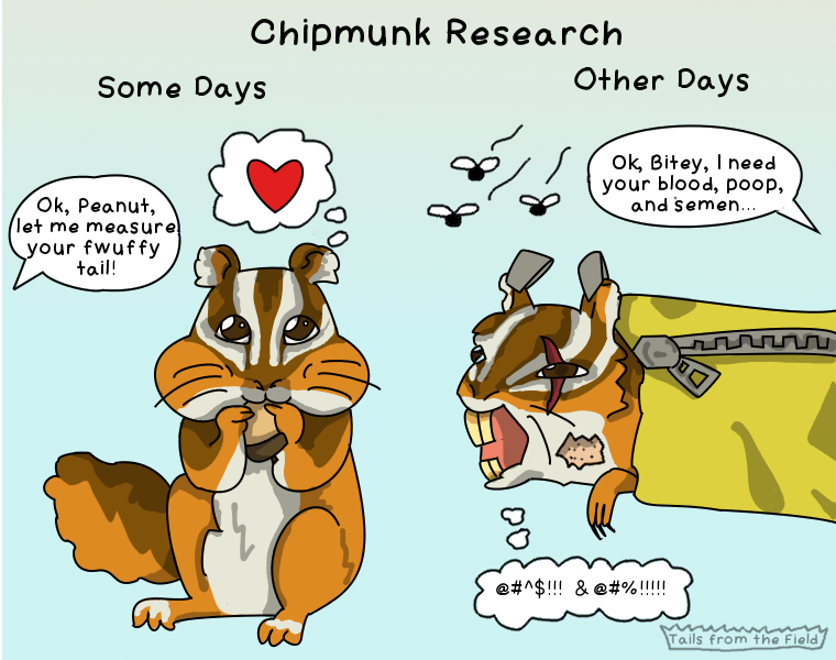 23. Chipmunk Research