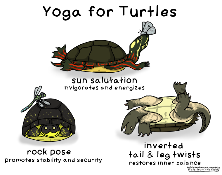Yoga and turtles has got to be a pretty niche joke. GEDDIT? NICHE?