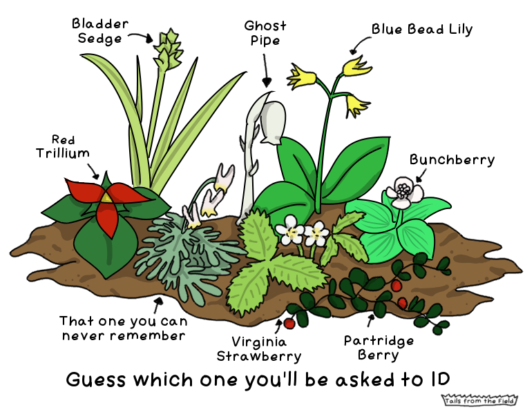 Please, just ask me about ANY OTHER PLANT HERE.