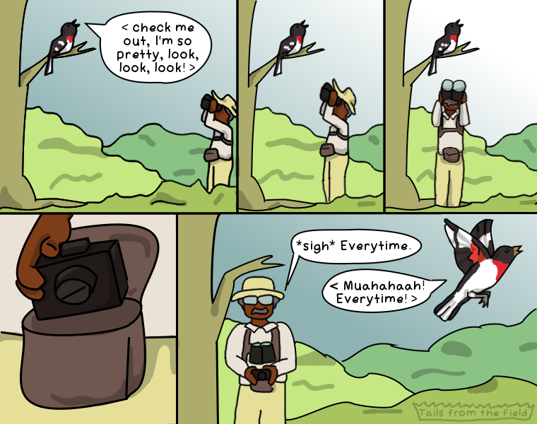 """Panel 1- A Red-breasted Grosbeak sings in a tree as an older Black man with binoculars approaches. The bird sings """"look at me I'm so pretty, look, look"""". Panel 2 - The man gets closer. Panel 3 - the man gets even closer. Panel 4 - close up of the man's hand reaching for a camera. Panel 5 - the bird flies away laughing and says, """"every time"""", and the man sighs and puts the camera back while saying, """"every time."""""""